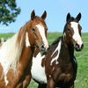 Calming effect on horses