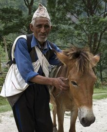 Donkey owner in India helped by Brooke.