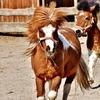 Ponies at play.