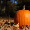 A pumpkin highlighted in field of pumpkins.