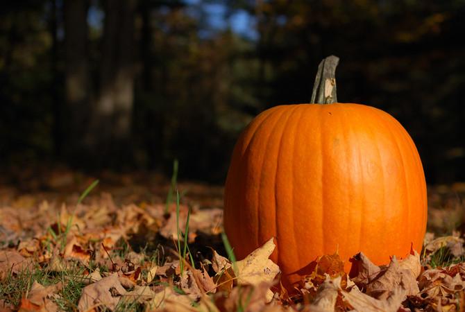 Pumpkin highlighted in an autumn field.