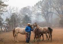 Horseman caring for horses in aftermath of a wild fire.