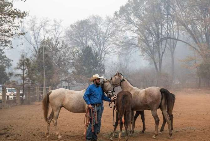 Horses rescued from wild fire.