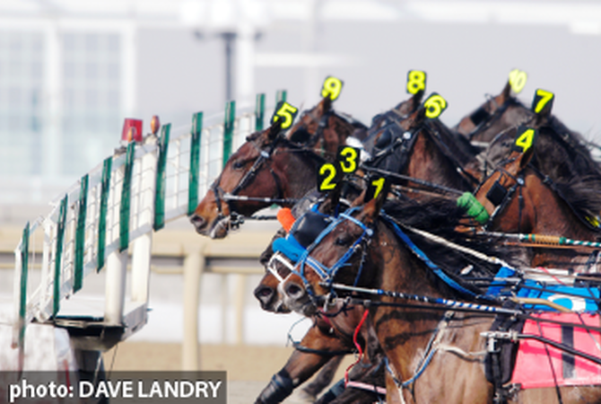 Horses ready to race.