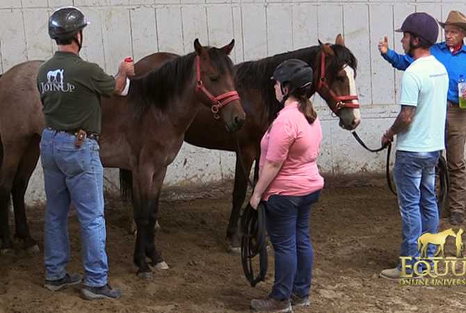 Monty Roberts demonstrating getting horses used to spray bottles.