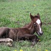 A very young foal in a pasture.