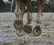 Galloping horse hoofs on a rainy day.