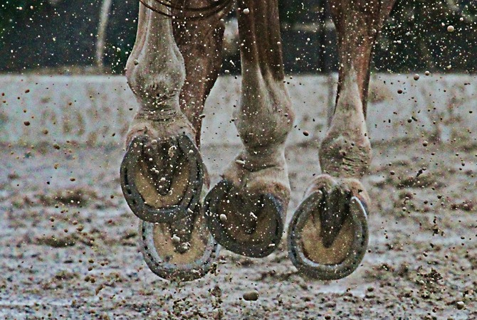 A view of a horse's hoofs as he gallops on track on a rainy day.