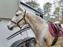 Saddled horse next to a travel trailer.
