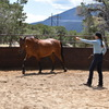 Julie Goodnight in action training horse.