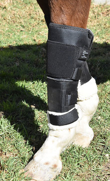 Knee shields on a horse's legs.