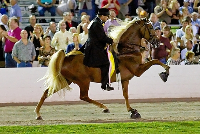 High-stepping horse performing in competition