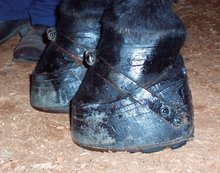 Sored horses' hoofsSored horses' hoofs.