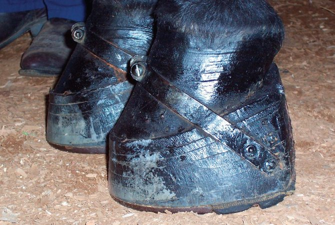 Horses' hooves covered by soring stacks to force horse to step higher.