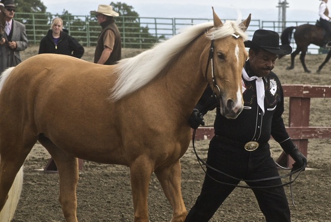 A Tennessee Walker being led by trainer at a competition.
