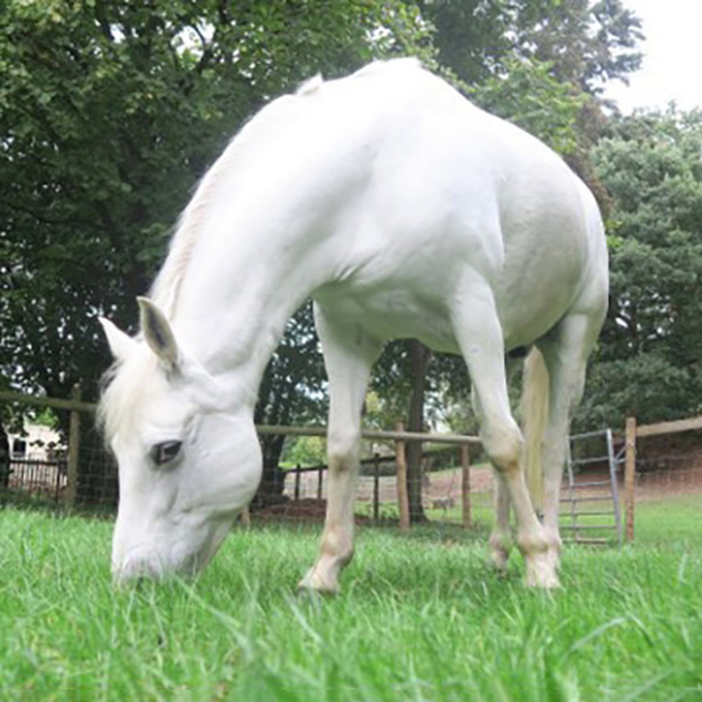 Manual Available On Preservation Of Rare Horse Breeds Equine Genetics In Live Animals And Post Mortem Equimed Horse Health Matters