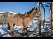 Horse with shaggy coat -Is it Cushing's or result of cold weather?.
