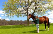 Heidi Reesink, Ph.D. '16 Assistant Professor in Equine Health.