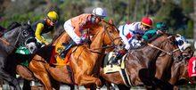 Horses racing at Santa Anita.