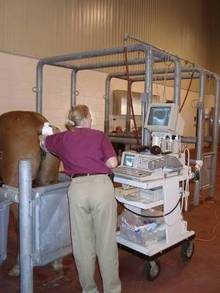HVeterinarian performing ultra sound on horse.