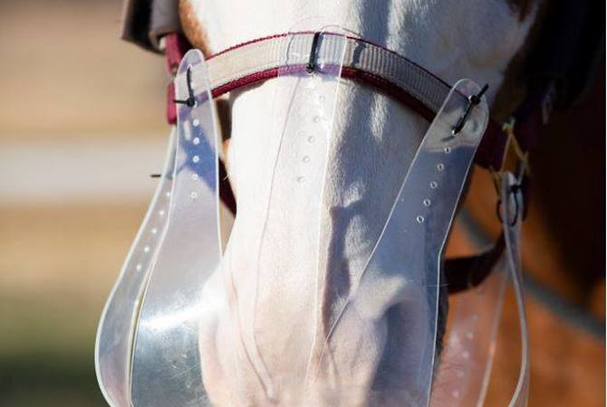 Horse wearing flexible Filly Slow Feed Muzzle