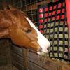 Horse eating from NibbleNet slow hay feeder.