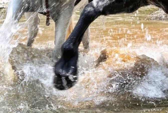 Horse hooves in water.