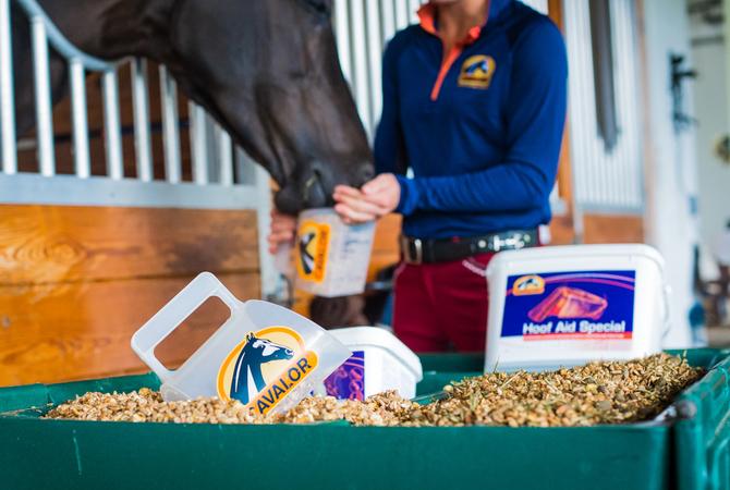 Feeding a horse Cavalor puffed grains.