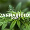 Medication cannabis -  cannabidol.