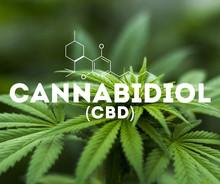 CBD Cannabidol Oil.
