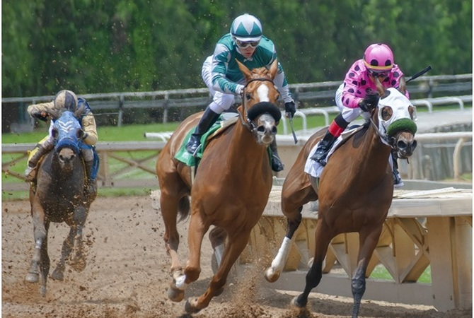 Race horses wearing Flair Nasal Strips.