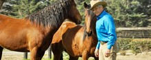 Monty Roberts with two mustangs in training.