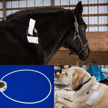 Horse and dog receiving pulse electro Magnetic field therapy.