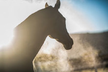 View of a horse breathing in polluted air.