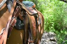 Cavallo saddle pad under saddle on  horse.