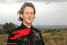 Dr Temple Grandin - Major contributor to The Movement's success.
