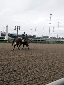 Race horse.