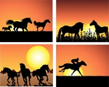 Horses frolicking as the sun sets.