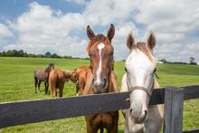 Horses in pasture on a summer day.