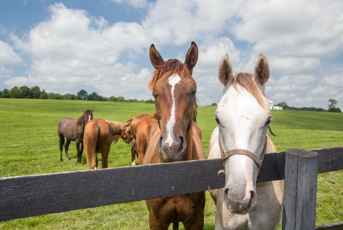 Scenic view of  healthy horses in a pasture on a lovely summer day.