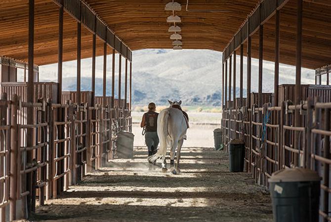 Horseman walking horse at Montana Center for Horsemanship