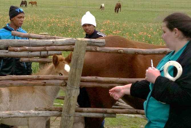 Veterinarian ready to vaccinate horse in pasture.