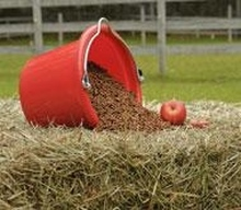 Red bucket accenting basic horse nutrition including forage, grain and an apple.
