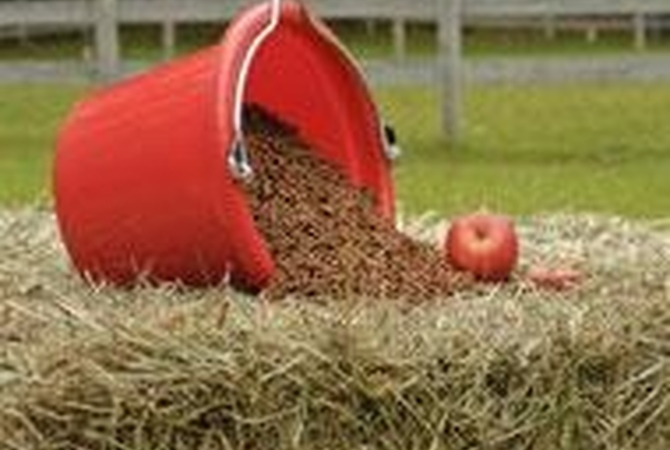 Good nutrition for horses requires a red bucket variety of nutrients including forage, hay, grain and supplements