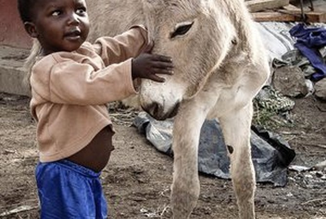 Young boy with donkey foal in Kenya