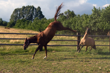 Playful healthy horses.