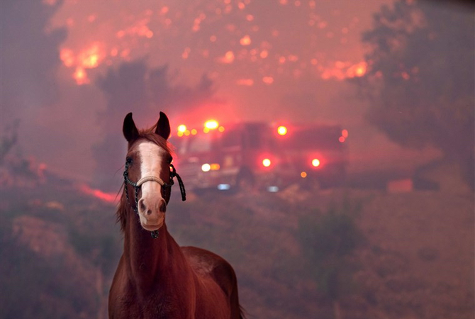Rescued horse with wild fire in background.