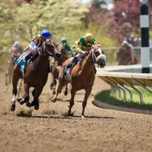 Horses racing during a spring meet at Keeneland Race Track.