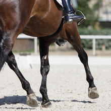 Metal shod hooves of a sport horse in action.