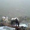 Foggy setting with pack horses crossing river.